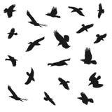 Silhouettes de vol d'Eagles, illustration de vecteur Image libre de droits