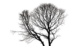Silhouettes of Dead Tree without Leaves Stock Image