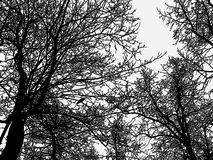 Silhouettes of deciduous trees in the winter forest stock photo