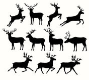 Silhouettes of Deers Royalty Free Stock Image