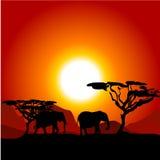 Silhouettes des éléphants sur le coucher du soleil africain Photos stock