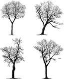 Silhouettes des arbres Photographie stock