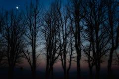 Silhouettes des arbres Photos libres de droits