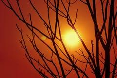 Silhouettes des arbres au coucher du soleil Image stock