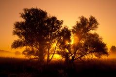 Silhouettes des arbres dans le lever de soleil orange éclairé à contre-jour. Images libres de droits