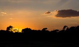 Silhouettes des arbres dedans au coucher du soleil l'horizon de forêt avec quelques nuages Photo stock