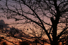 Silhouettes des arbres et du réverbère sans feuilles Images libres de droits