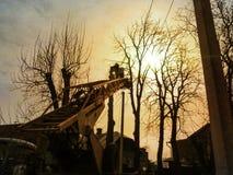 Silhouettes des arbres grands d'élagage de travailleurs avec une plate-forme de travail aérien dans les rayons d'or du soleil Le  image libre de droits