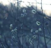 Silhouettes des branches d'un arbre dans le soleil d'aube Image stock