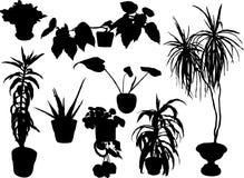 Silhouettes des fleurs Photographie stock libre de droits