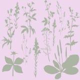 Silhouettes des fleurs et de l'herbe Photographie stock