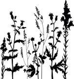 Silhouettes des fleurs et de l'herbe Photo stock