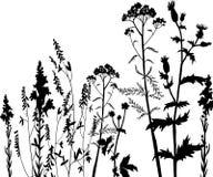 Silhouettes des fleurs et de l'herbe Photos stock