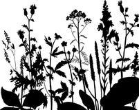 Silhouettes des fleurs et de l'herbe Images stock