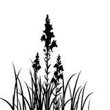Silhouettes des fleurs et de l'herbe Photo libre de droits