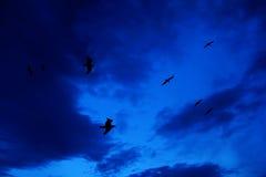 Silhouettes des mouettes sur le ciel bleu Photos stock