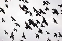Silhouettes des oiseaux Images stock