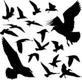 Silhouettes des oiseaux Image stock