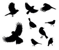 Silhouettes des oiseaux Photos libres de droits