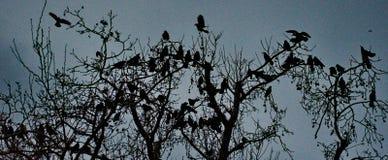 Silhouettes des oiseaux Photo libre de droits