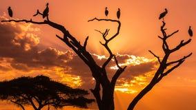 Silhouettes des oiseaux sur le coucher du soleil Photos stock