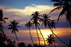 Silhouettes des palmiers au coucher du soleil Photos libres de droits