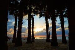 Silhouettes des palmiers contre la mer, coucher du soleil Image libre de droits
