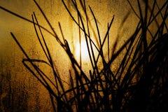 Silhouettes des pots de fleurs avec des feuilles en serre chaude sous la lumière du soleil jaune lumineuse d'automne vue la fen images stock