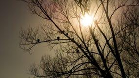 Silhouettes des troupeaux de pigeon au coucher du soleil Images stock