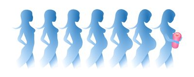 Silhouettes of the development of a pregnancy stock illustration