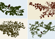 Silhouettes of the different trees branches Stock Image