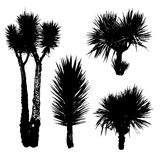 Silhouettes of different types of Yucca Royalty Free Stock Images