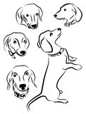 Silhouettes of dogs. Dachshund dogs silhouettes isolated on white background Royalty Free Stock Photo