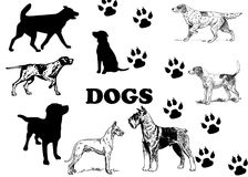 Silhouettes of dogs and dog footprintss. Silhouettes of dogs and dog footprints on a white background royalty free illustration