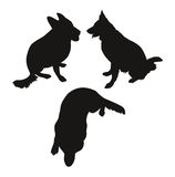 Silhouettes of dogs Royalty Free Stock Photos