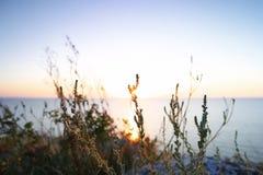Silhouettes dry grass against Sea of Azov horizon Royalty Free Stock Photo