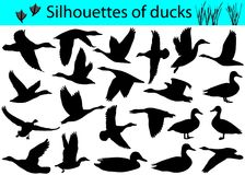 Silhouettes of ducks Royalty Free Stock Photo