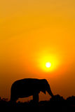 Silhouettes elephant wiith sunset scene Stock Photography