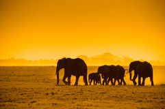 Silhouettes of elephants Stock Photo