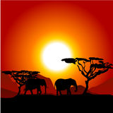 Silhouettes of elephants on African sunset. Background Stock Photos