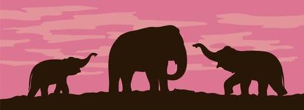 Silhouettes of elephants on sunset background Stock Photography