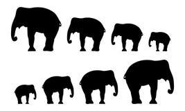 Silhouettes of elephants. Vector illustration vector illustration