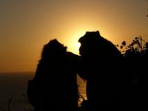 Silhouettes et coucher du soleil de singe Photo libre de droits