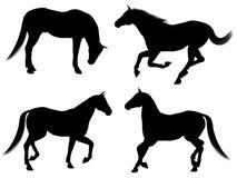 silhouettes för 1 häst Arkivfoto