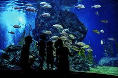 Silhouettes of family with two kids in oceanarium. Looking at fishes in aquarium royalty free stock photography