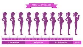 Silhouettes femelles enceintes Photos stock