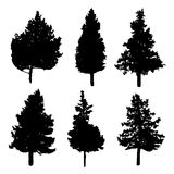Silhouettes of fir and pine trees Stock Photography