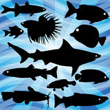 Silhouettes of fish. A background design with silhouettes of fish Stock Photography