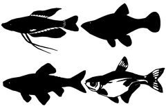 Silhouettes fish on white background Royalty Free Stock Images