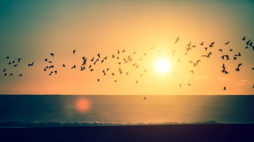 Silhouettes flock of birds over the Atlantic ocean during sunset. Stock Images
